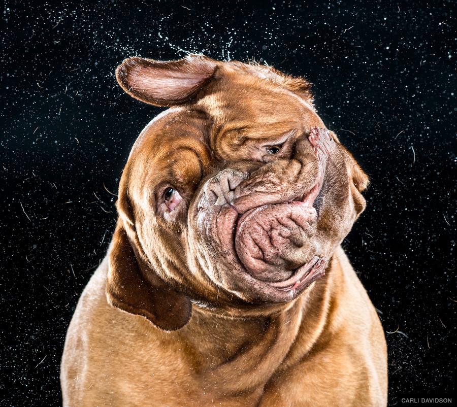 必見!スローモーションで見る犬のブルブル動画!