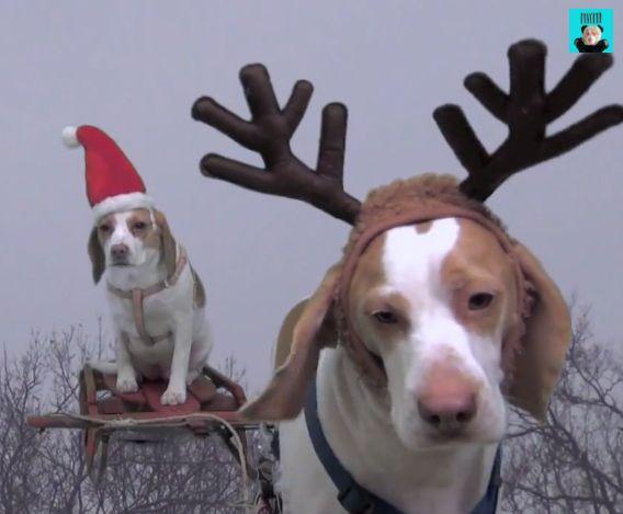 飾り付けを台無しにしてしまうサンタ犬とトナカイ犬!!