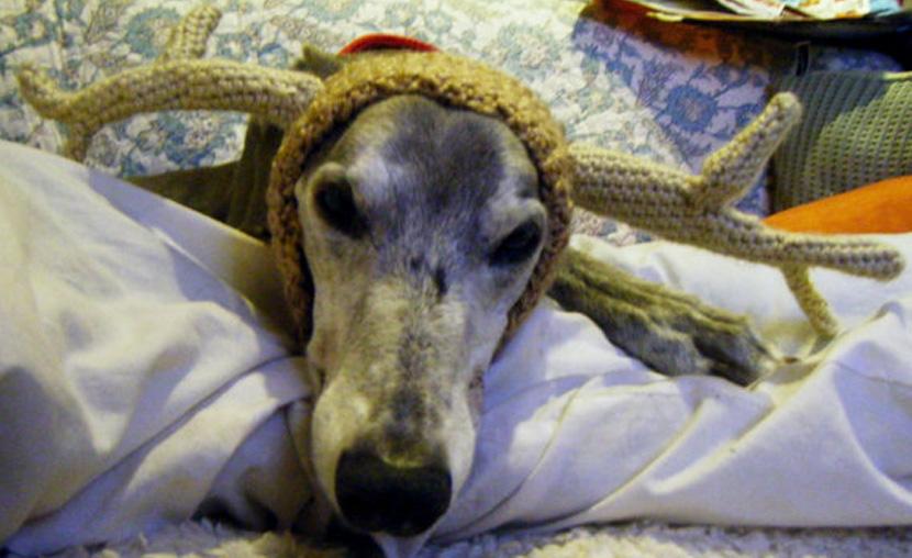 [25pics+1video] 愛犬だってクリスマスを楽しみにしている!!