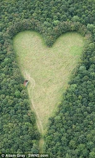 亡き妻を称え植えた木が成長し見事なアートに!!