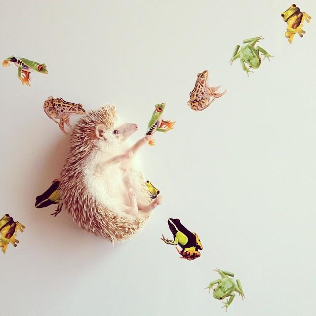 世界で最もかわいいハリネズミ!!