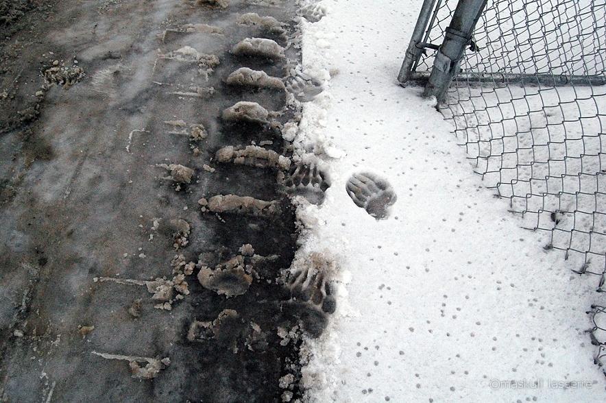 この靴を履いて雪の上を歩くと周りは大騒ぎ?!