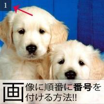 画像に番号を付ける方法!!ギャラリーショートコード!!