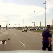 ducks-crossing-the-road