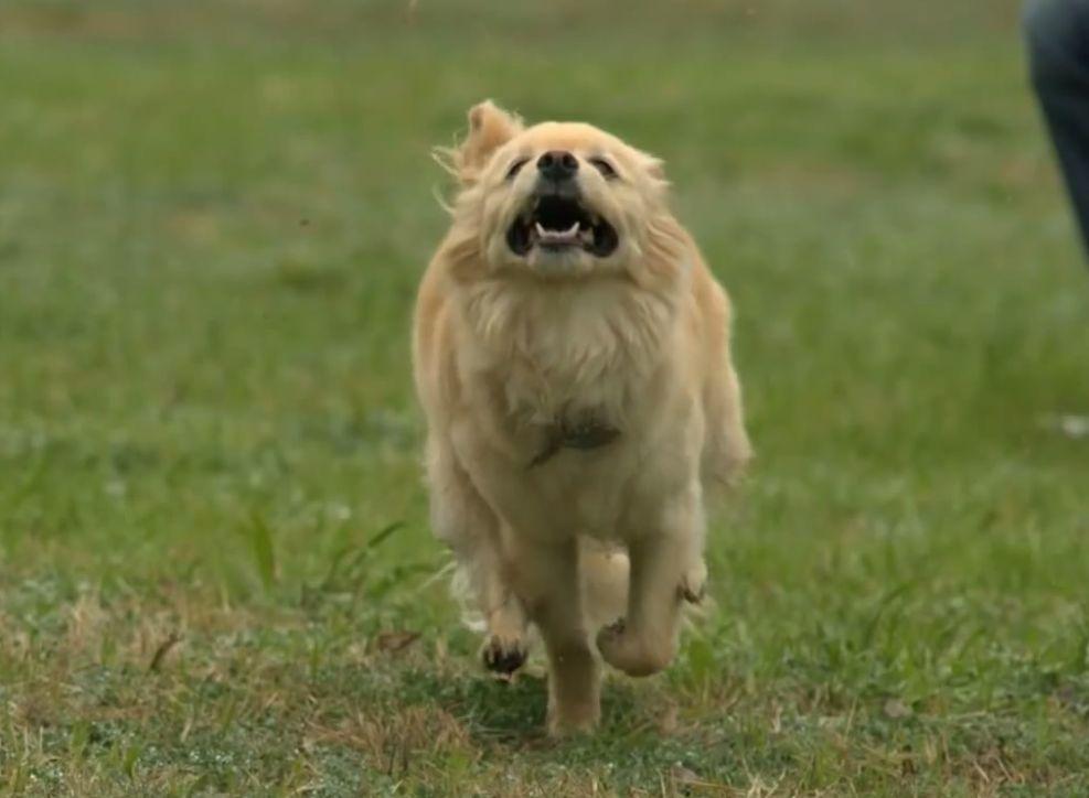 犬が跳ぶ姿をスローモーション映像にしてみた結果