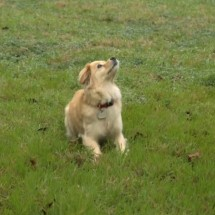Leaping Slow Motion Doggy (8)
